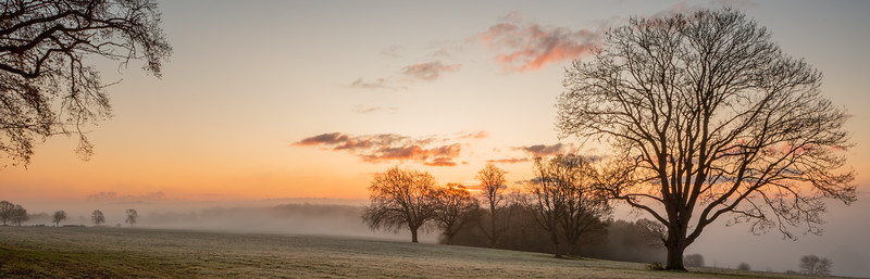 2019 - Foggy dawn on the Penshurst Estate 009.jpg