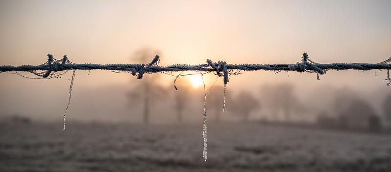 2019 - Foggy dawn on the Penshurst Estate 026.jpg