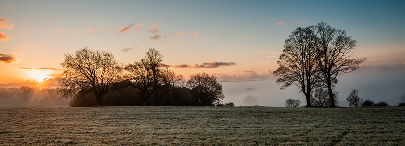 2019 - Foggy dawn on the Penshurst Estate 014.jpg