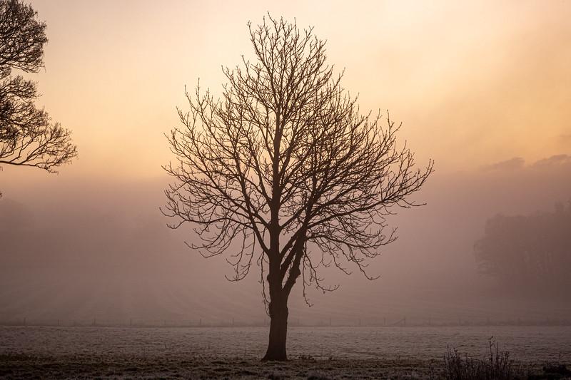 2019 - Foggy dawn on the Penshurst Estate 004.jpg