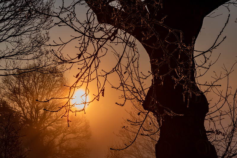 2019 - Foggy dawn on the Penshurst Estate 021.jpg