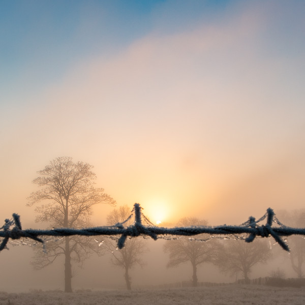 2019 - Foggy dawn on the Penshurst Estate 027.jpg