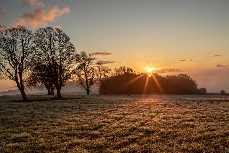 2019 - Foggy dawn on the Penshurst Estate 019.jpg