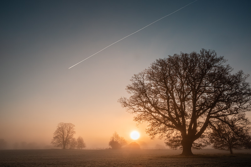 2019 - Foggy dawn on the Penshurst Estate 029.jpg