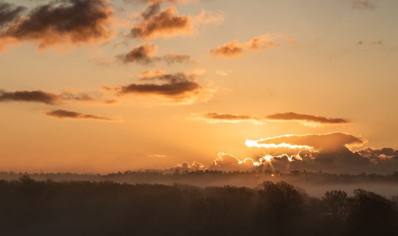 2019 - Foggy dawn on the Penshurst Estate 013.jpg