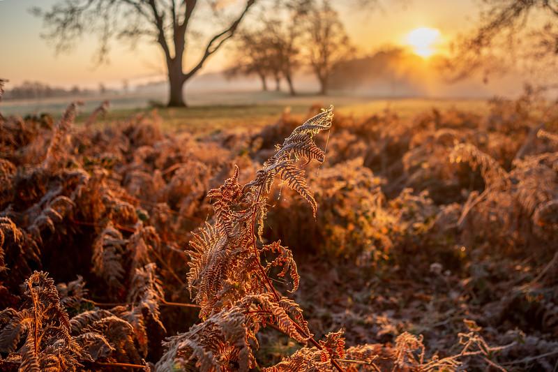 2019 - Foggy dawn on the Penshurst Estate 020.jpg
