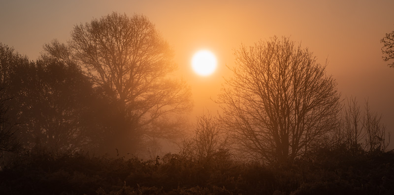 2019 - Foggy dawn on the Penshurst Estate 023.jpg
