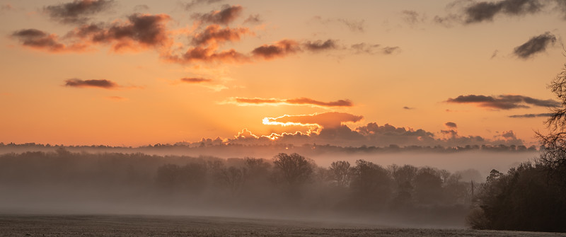 2019 - Foggy dawn on the Penshurst Estate 012.jpg