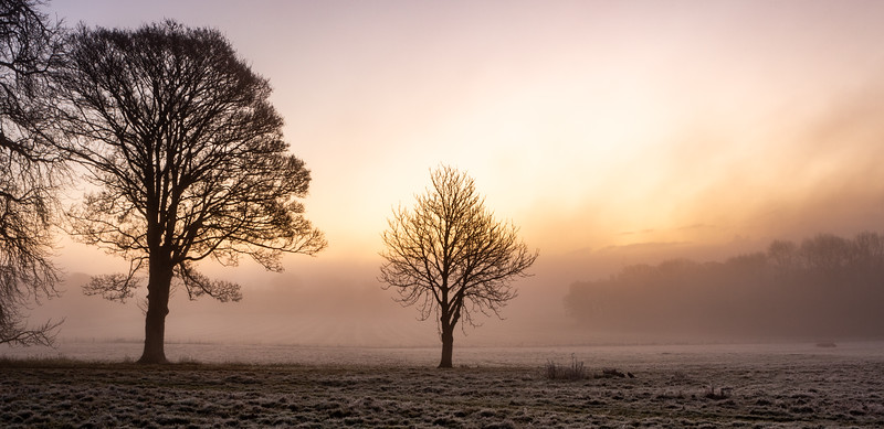 2019 - Foggy dawn on the Penshurst Estate 005.jpg