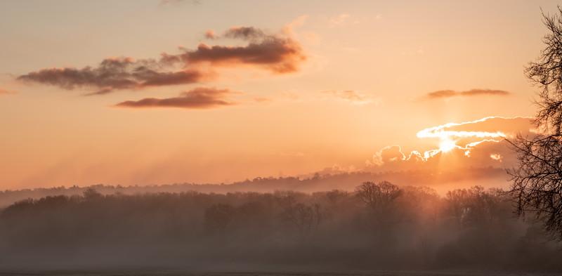 2019 - Foggy dawn on the Penshurst Estate 016.jpg