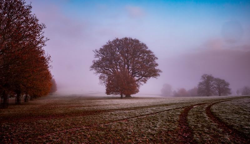 2019 - Foggy dawn on the Penshurst Estate 002.jpg