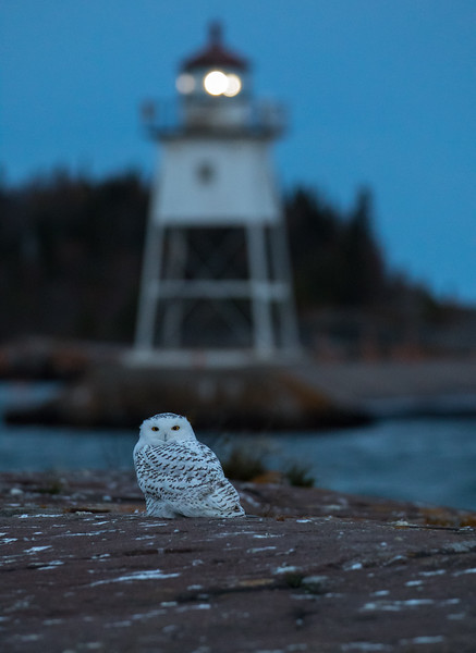 Snowy and Lighthouse