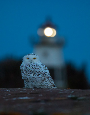 Appears in the Audubon Society's online article, Birdist Rule #29: Try Birding After Dark, January 2017 | Additionally Published by the Minnesota Conservation Volunteer Magazine