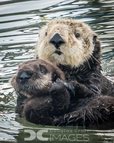 Mom & Pup