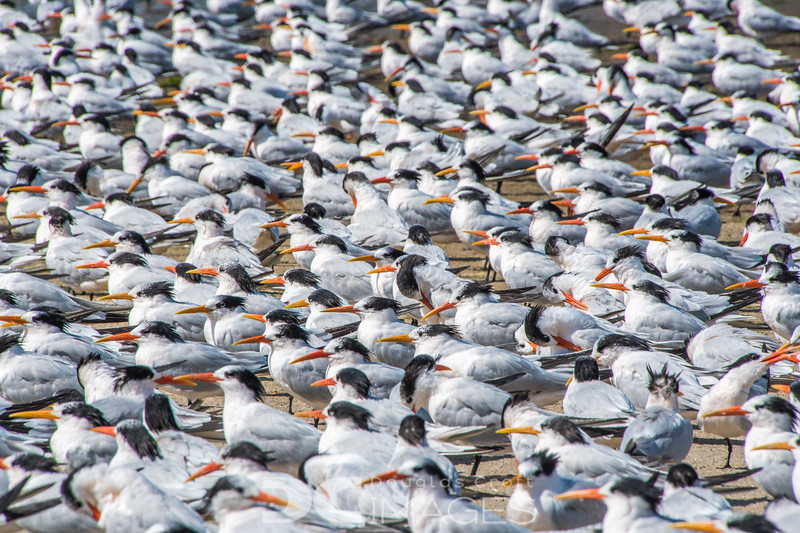 A Committee Of Terns