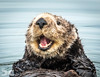 Happy Otter