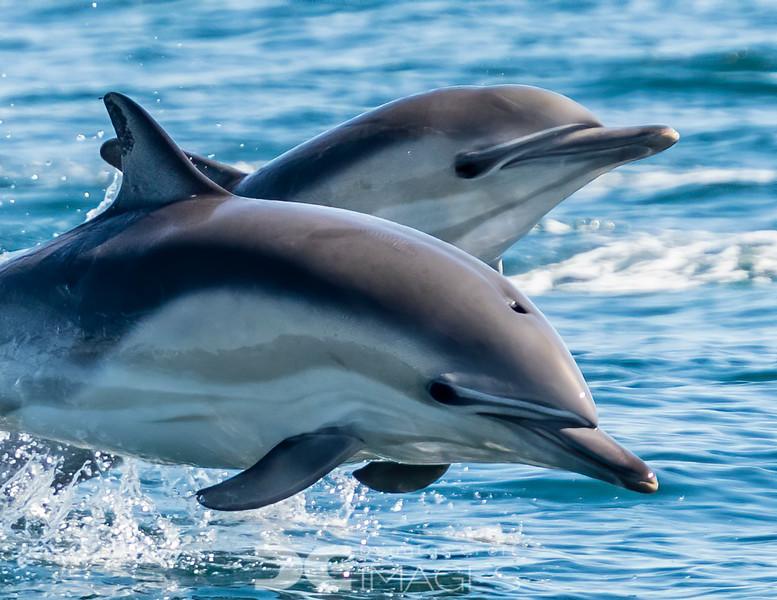 Levitating Dolphins