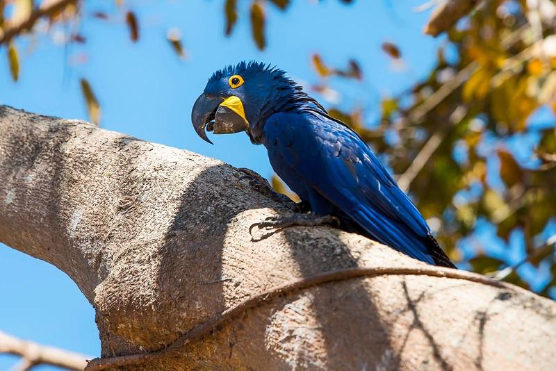 Macaw on a tree