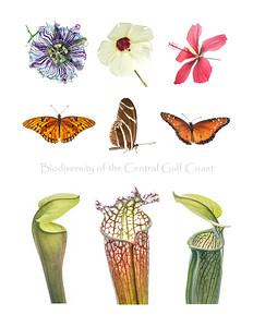 A collection of native wildflowers, butterflies and pitcher plants from the Gulf Coast.