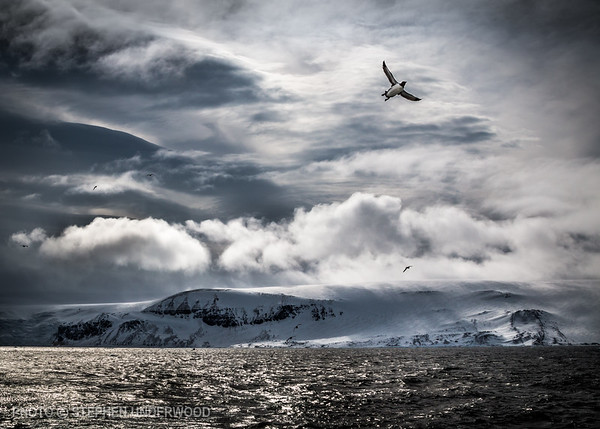 Photography from Arctic Svalbard