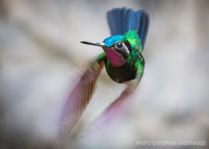 Wildlife photography from Costa Rica
