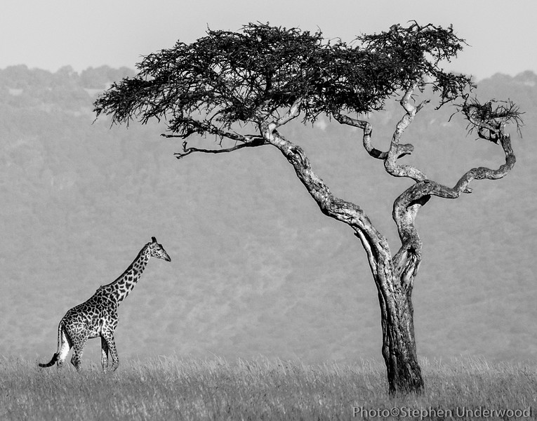 Wildlife photographs from the Masai Mara, Kenya
