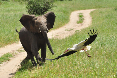 wildlife portfolio 2 (digital)