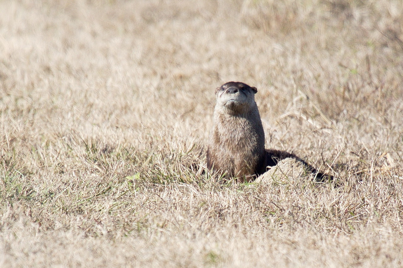 This photo was taken in central Florida, not in the Otter Banks of North Carolina.