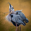 Brenda's Heron Photo final