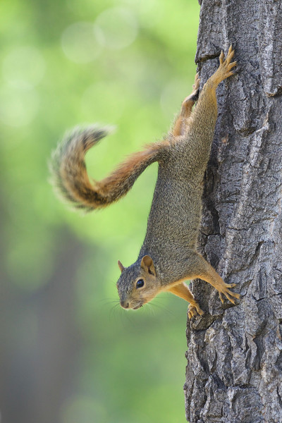 a tree squirrel in forest habitat