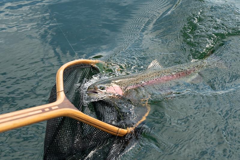 Fishing, fly fishing, redband rainbows, BC, Canada