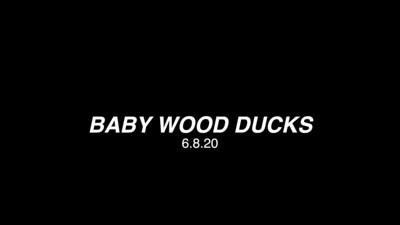 WOODDUCKS 6.8.20