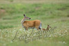 Mammals, big game, whitetails, doe and fawn, wildlife