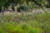 Mammals, deer, white-tailed deer, buck, running, wildlife