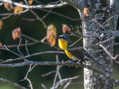 Virginia Birds May 2018-1523