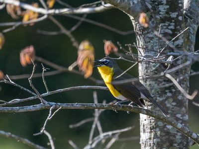 Virginia Birds May 2018-1525