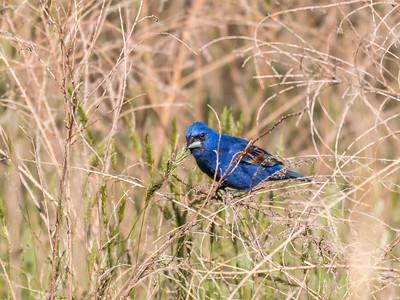 Virginia Birds May 2018-1606