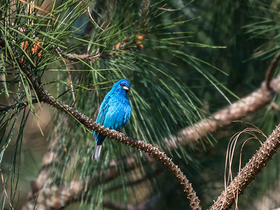 Virginia Birds May 2018-1554