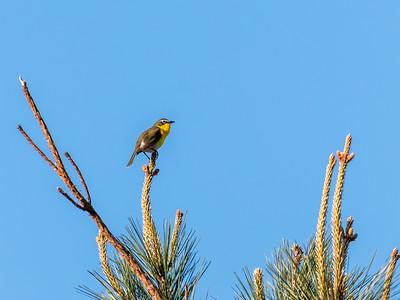 Virginia Birds May 2018-1499