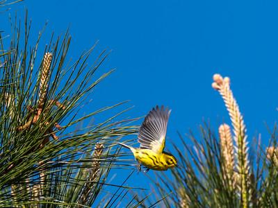 Virginia Birds May 2018-1580