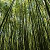 Bamboo forest in Virunga