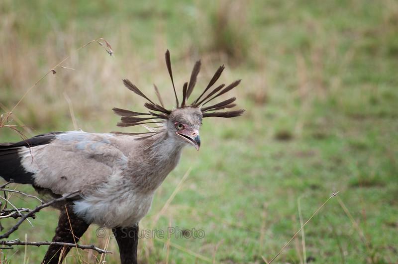 Birds on the Serengeti