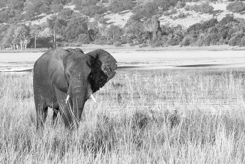 Botswana0879 BW