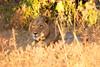 Botswana0146