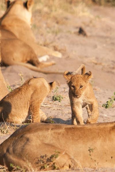 Botswana0959