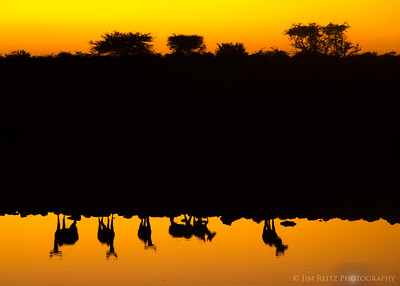 Kudu reflections - Etosha National Park, Namibia.