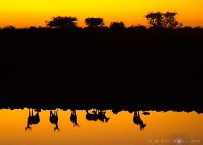 Kudu reflections - Etosha National Park, Namibia.