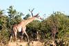 Botswana0076