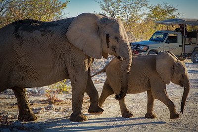 Elephant family causes a traffic jam - Etosha National Park, Namibia.