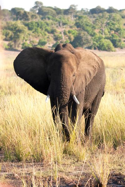 Botswana0833